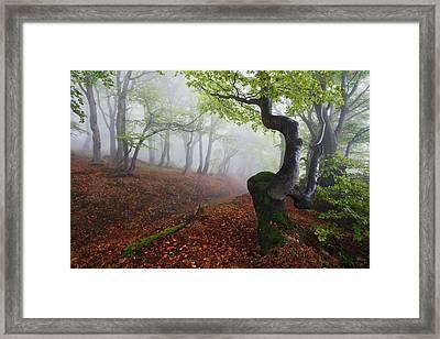 Fangorn Forest Framed Print