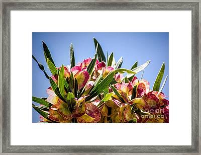 Fanned Flowers Framed Print