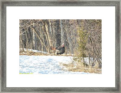 Framed Print featuring the photograph Fanning by Dacia Doroff