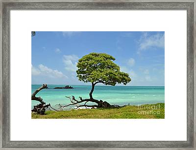 Fanning Tree On Beach Framed Print