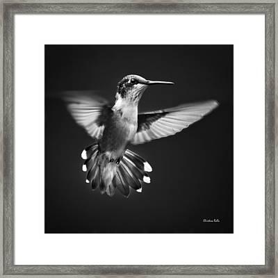 Fantail Hummingbird Framed Print