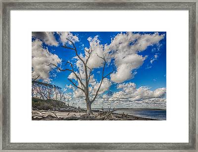 Fantasma Framed Print by Paula Porterfield-Izzo