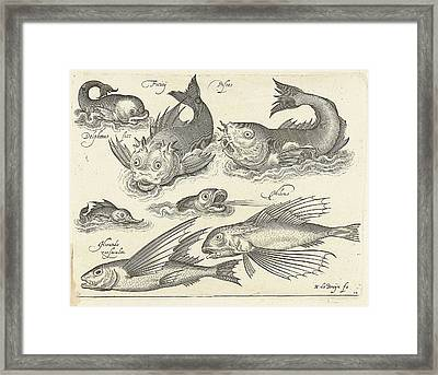 Fantastic Invertebrates, Including Dolphin And Dragonet Framed Print by Nicolaes De Bruyn