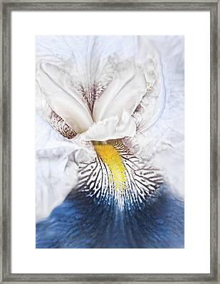 Fantasy Blue Iris Flower Framed Print