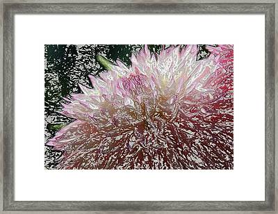 Framed Print featuring the photograph Fantasy Dahlia by Denyse Duhaime