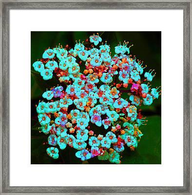 Fantasy Flowers 10 Framed Print by Margaret Saheed
