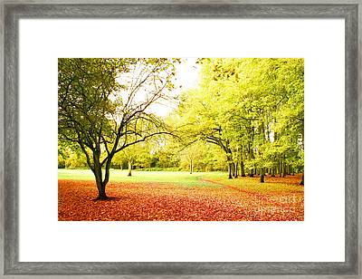 Framed Print featuring the photograph Fantasy Forest by Boon Mee