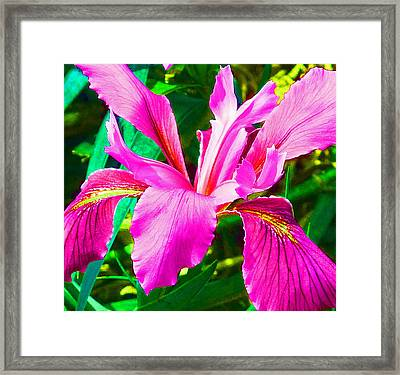 Fantasy Iris Framed Print by Margaret Saheed