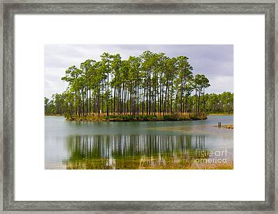 Fantasy Island In The Florida Everglades Framed Print
