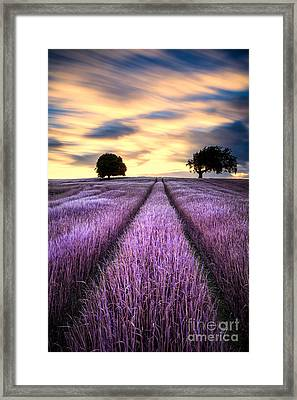 Fantasy Trees Framed Print by John Farnan