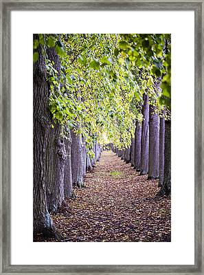 Faraway So Close Framed Print