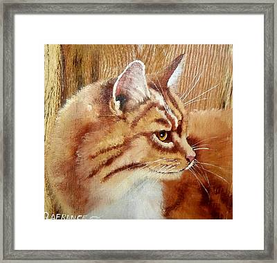 Farm Cat On Rustic Wood Framed Print by Debbie LaFrance