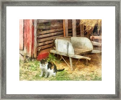 Farm Cat Framed Print by Susan Savad