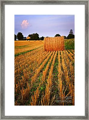 Farm Field With Hay Bales At Sunset In Ontario Framed Print