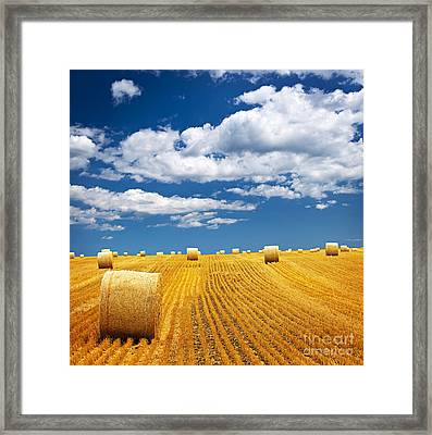 Farm Field With Hay Bales Framed Print by Elena Elisseeva