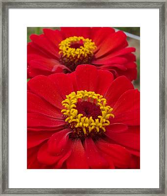 Farm Stand Flowers Framed Print