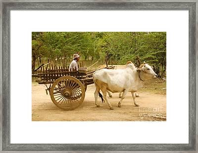 Farmer Driving An Ox Cart Old Bagan Burma Framed Print