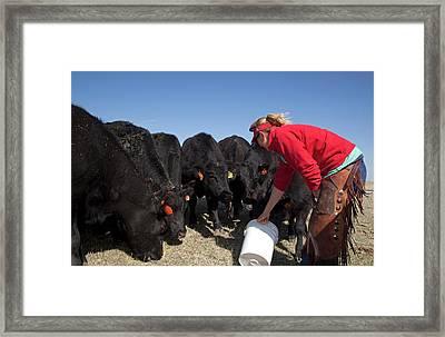 Farmer Feeding Cattle Framed Print by Jim West