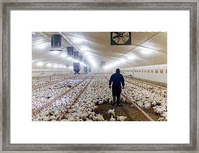 Farmer In A Barn With Hens Framed Print