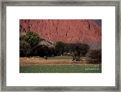 Farmer In Field In Northern Argentina Framed Print