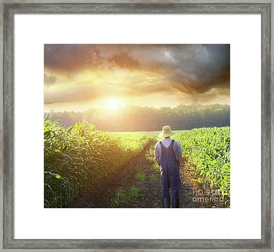 Farmer Walking In Corn Fields At Sunset Framed Print by Sandra Cunningham