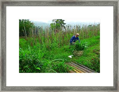 Farmer In Bali Framed Print