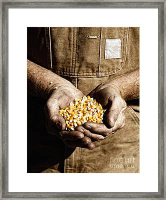 Farmer's Hands With Seed Corn Framed Print