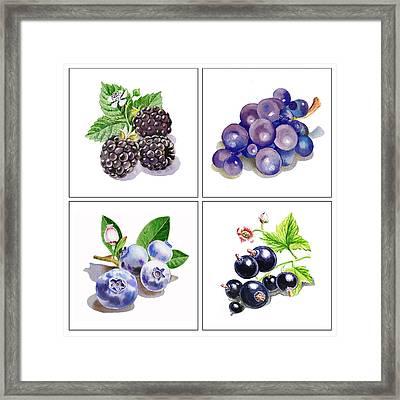 Farmers Market Gifts Black And Blue Vitamins Framed Print by Irina Sztukowski
