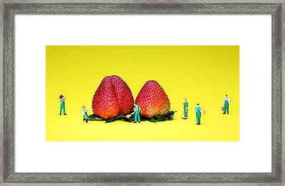 Farmers Working Around Strawberries Framed Print
