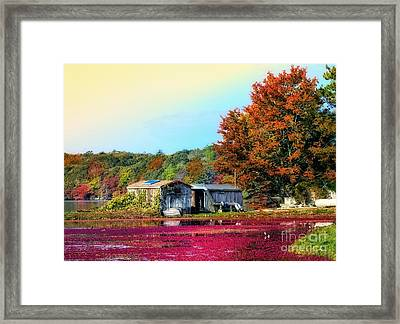 Framed Print featuring the photograph Farming Cranberries by Gina Cormier