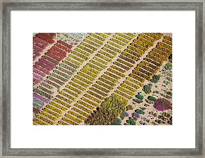 Farming Flowers Framed Print by John Ferrante