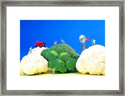 Farming On Broccoli And Cauliflower Framed Print by Paul Ge