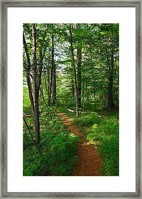 Farmington River Walk No. 1 Framed Print