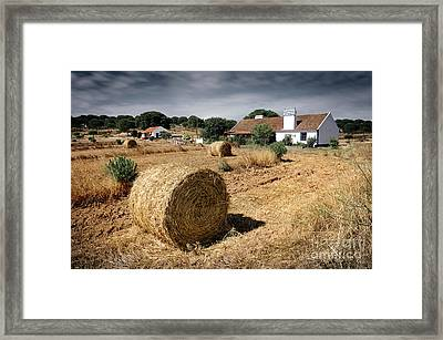 Farmland Framed Print by Carlos Caetano