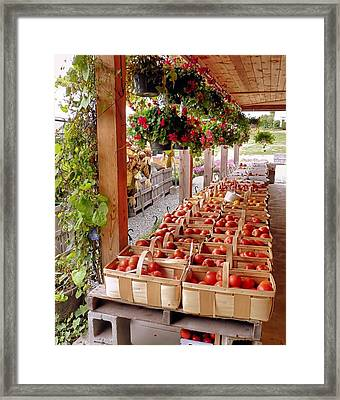 Farmstand Framed Print by Janice Drew
