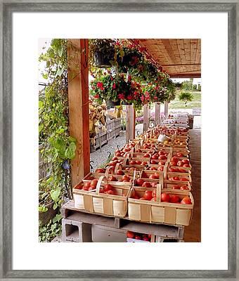 Farmstand Framed Print by Janice Drew