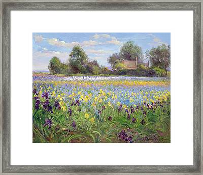 Farmstead And Iris Field Framed Print by Timothy Easton