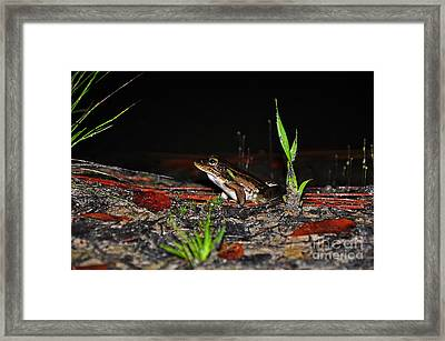 Fascinating Frog Framed Print by Al Powell Photography USA
