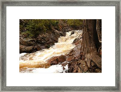 Fast Water And Cedars Framed Print by Sandra Updyke