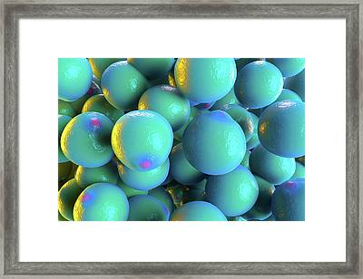 Fat Cells Framed Print by Roger Harris/science Photo Library