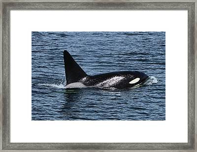 Fat Fin Aka Ca171b Framed Print