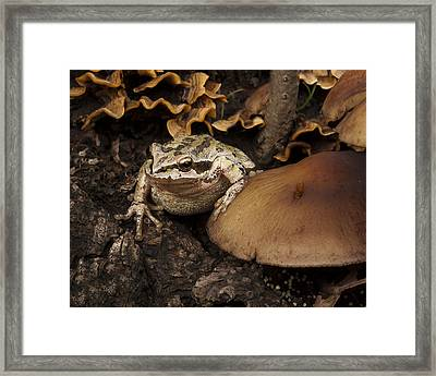 Fat Frog Framed Print