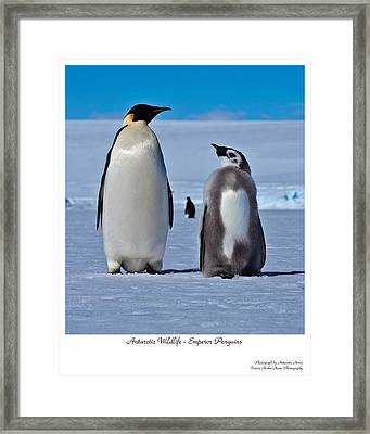Father And Son Framed Print by David Barringhaus