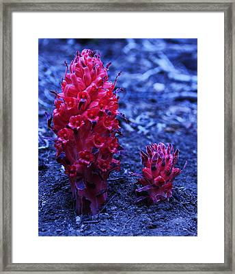Framed Print featuring the photograph Father And Son by Sean Sarsfield