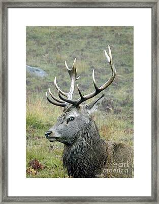 Stag Party The Series Father To Be. Framed Print