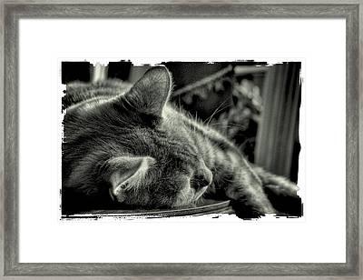 Fatigued Feline Framed Print by David Patterson