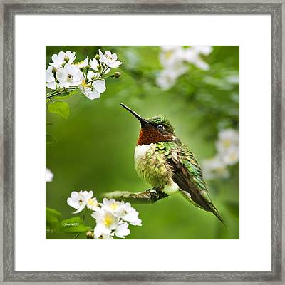 Fauna And Flora Hummingbird Square Framed Print