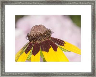 Framed Print featuring the photograph Favorite Flower by Robert Culver