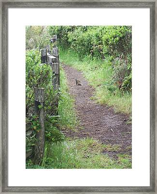 Favorite Place Framed Print