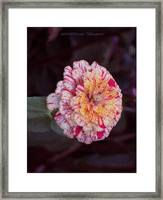 Favourite Of Butterflies Framed Print by Sonali Gangane